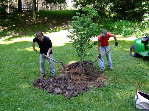 Ültessünk nyáron is! - Ültetés kezdőknek és haladóknak