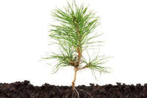Ültessünk! - Ültetés kezdőknek és haladóknak