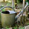 Szabad-e nyáron növényeket ültetni?