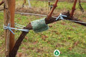 Hogyan védekezhetünk a szőlőben és gyümölcsösben károsító atkák ellen vegyszerek nélkül?