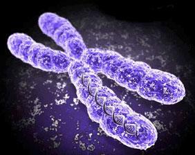 Apámtól  vagy Anyámtól örököltem?- génjeink és az egészségünk