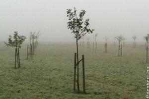 A legtutibb őszi ültetnivalók