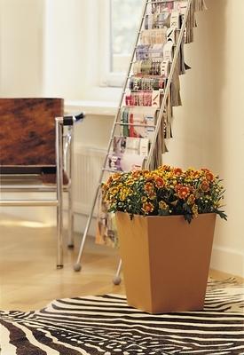 A Díva színre lép - avagy bemutatjuk szeptember szobanövényét