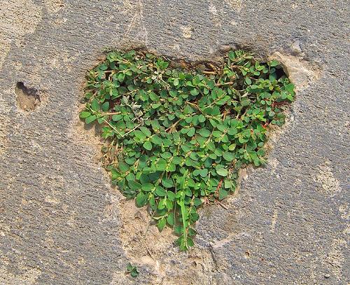 szív a betonban