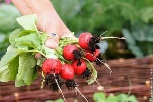 Ültessünk retket a kertünkbe!