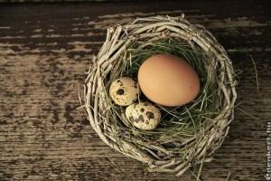 Fontos kérdések a tojásról