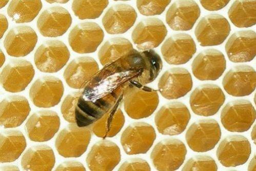 méz méhecskével