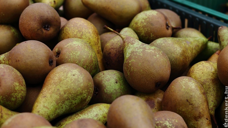 Hogyan tároljuk el az almát, a körtét és a diót télire, hogy ne menjen tönkre?