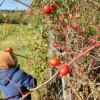 Őszi finomságok az erdőből - csipkebogyó tea, lekvár és bonbon!