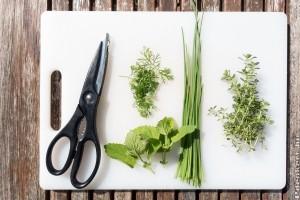 Hogyan szárítsunk a fűszernövényeket? - Útmutató 3 lépésben