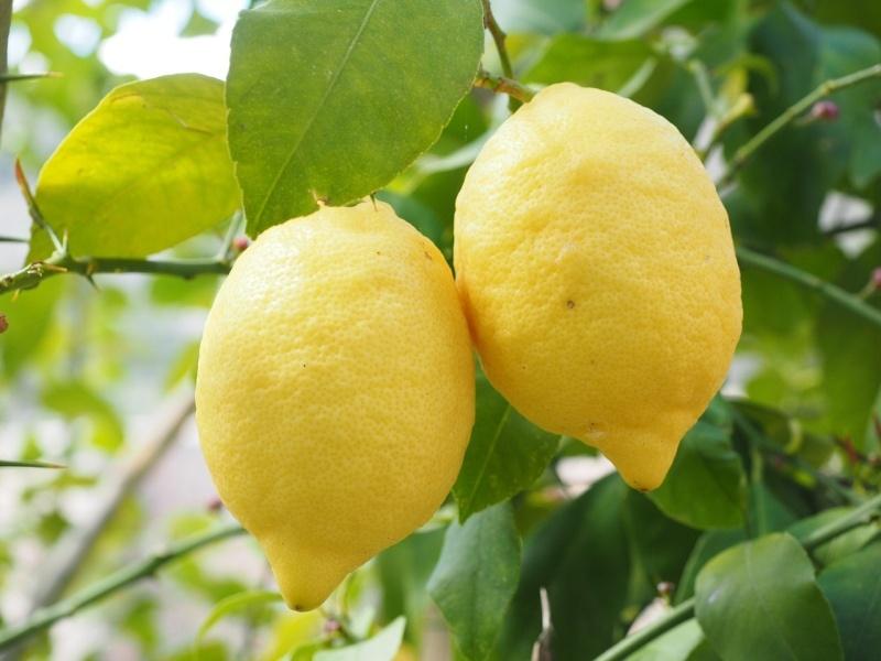 citrom_tartasa