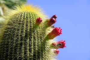 Néhány fontos tudnivaló a kaktuszokról!