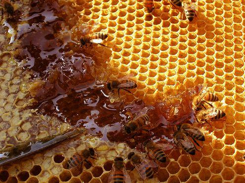 méh mézzel