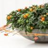 Korallbokor (Solanum capsicastrum)
