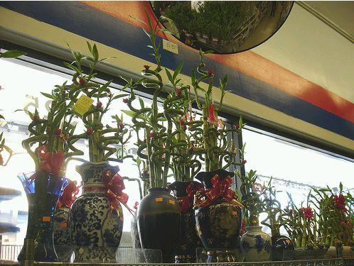 Bambuszok a boltban