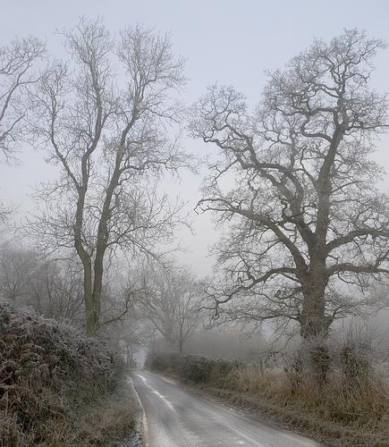 téli-fák-fagy