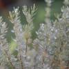 Téli növényápolás: fagy elleni védekezés