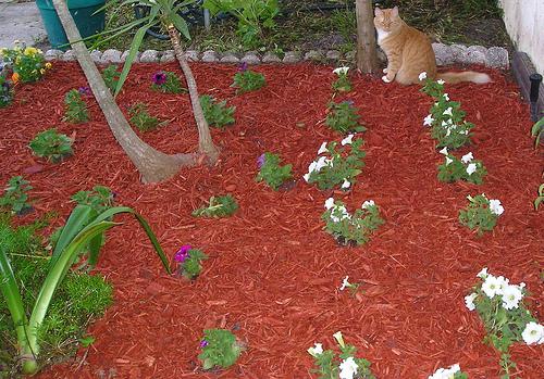 mulcs a kertben