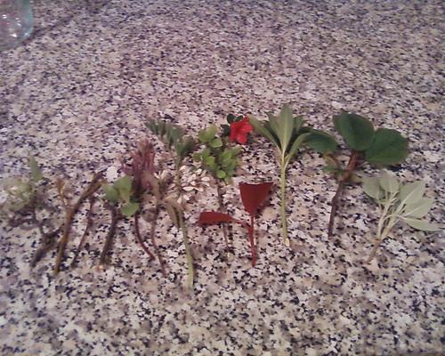 növényhajtások