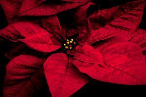 Karácsonyi dekoráció házilag! - Adventi koszorú 20 perc alatt