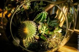Hogyan készítsünk terráriumot növényeinknek 6 lépésben?