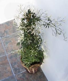 Virágpiramis