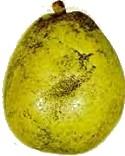 Mitől korompenészesek a gyümölcsök?
