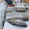A halászlé előtt - élőhalak a piacon
