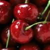Melyek a legjobb cseresznyefajták? - cseresznyetermesztés Franciaországban