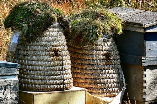 méhkaptárak
