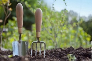 Mi a teendőnk a kertben februárban?
