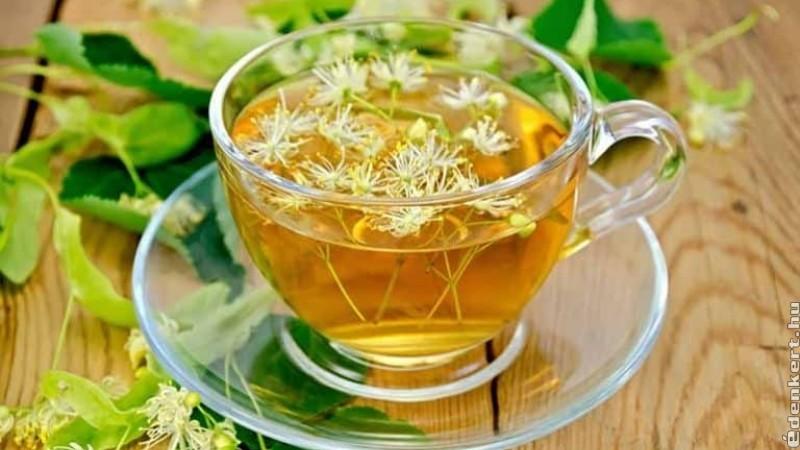 A hársfa tea: nyugtat és gyógyítja a torkot