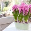 Hogyan készítsünk nőnapi virágcsokrot?