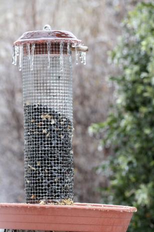 madáretető-orbán zoltán