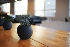 Mennyi fény kell a szobanövényeknek?