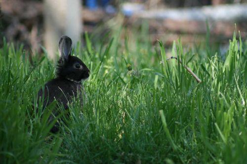 nyuszi a fűben-Herceg Zsolt