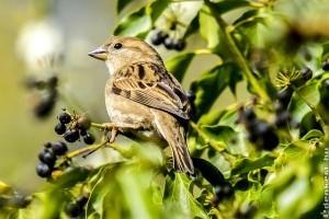 Milyen madárbarát növényeket ültessünk a kertünkbe?