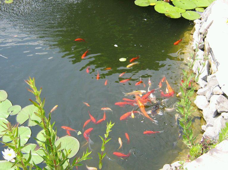 Kerti tó- Durucz kert