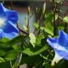 Itt a tavasz! Milyen futónövényt ültessünk?