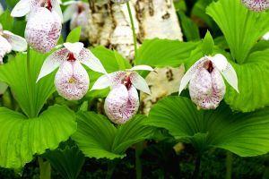 Milyen növény az orchidea?