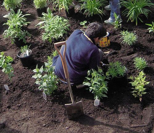 ültetés a kertben