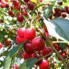 Milyen növénykondícionálókat alkalmazzunk növényeink egészsége érdekében?