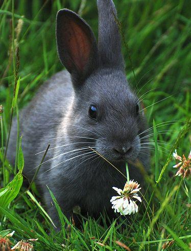nyúl a fűben