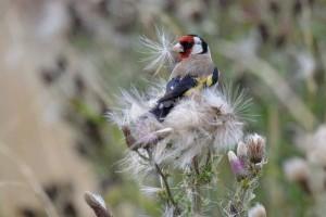 Miért fontosak a rovarevő madarak a kertünkben?