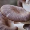 Hogyan termesszünk otthon gombát?