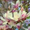 Top 5 tavaszi virág!