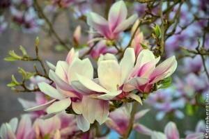 Top tavaszi virágok, cserjék és díszfák!
