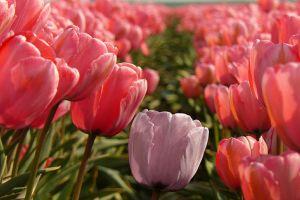A tavasz legnagyobb kertészeti rendezvénye: Dísznövény 2010 Szakkiállítás és Vásár