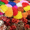 Hogyan szárítsunk virágokat mikrohullámú sütőben vagy szilikonnal?