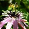 Top 10 futó- és kúszónövény a kertünkbe!